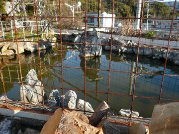 沢田・屋上池